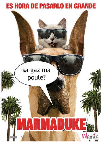 marmaduk, lolcats réalisé sur Wamiz