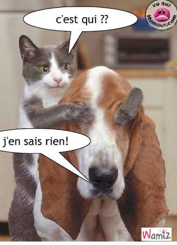 chiens et chats fonts mauvais cache - cache !!!, lolcats réalisé sur Wamiz