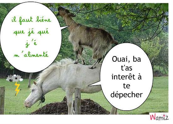 chèvre et cheval ne font pas bon ménage, lolcats réalisé sur Wamiz