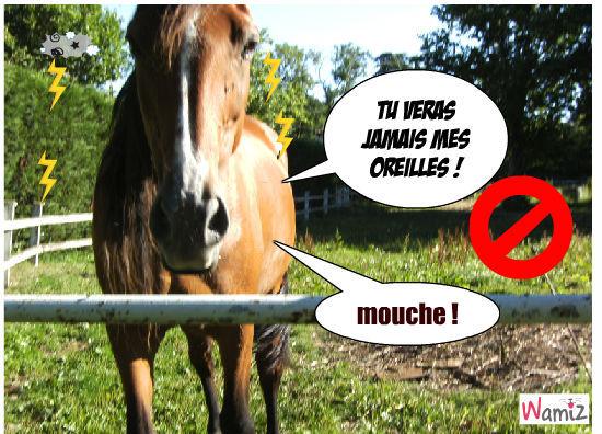 cheval récalcitrant et malpoli, lolcats réalisé sur Wamiz