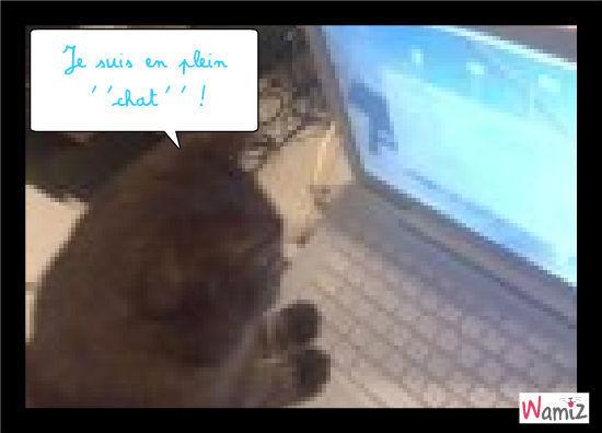 Chat', lolcats réalisé sur Wamiz