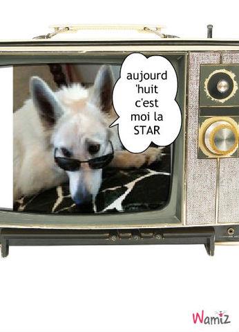 je fait de la télé c'est cool, lolcats réalisé sur Wamiz
