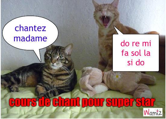 le chant et les chats, lolcats réalisé sur Wamiz