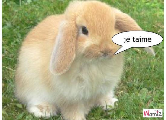 le lapin tro mignion, lolcats réalisé sur Wamiz