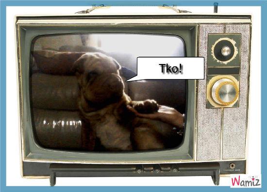 chien boxe, lolcats réalisé sur Wamiz