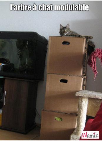 arbre à chat, lolcats réalisé sur Wamiz
