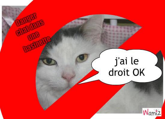 chat in basinette faite attention a votre bébé ..., lolcats réalisé sur Wamiz