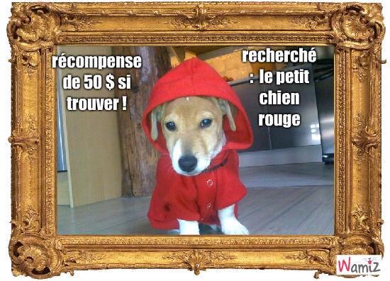petit chien rouge, lolcats réalisé sur Wamiz