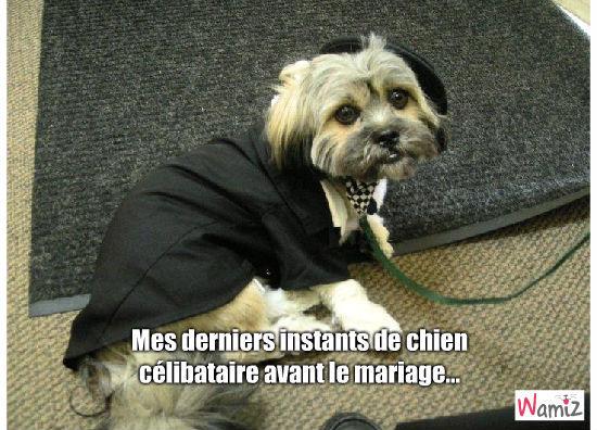 Le jour du mariage, lolcats réalisé sur Wamiz