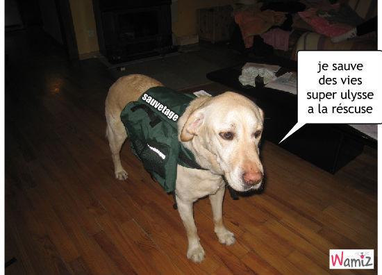 ulysse super chien, lolcats réalisé sur Wamiz