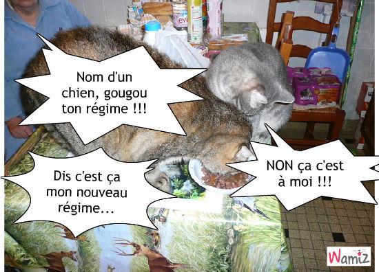 C'est la pâté pour le régime, Gougou...!, lolcats réalisé sur Wamiz
