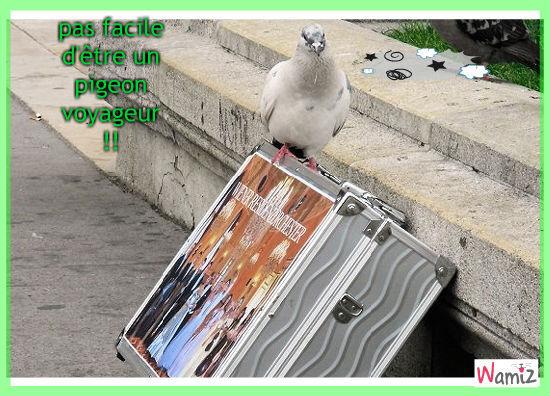 pigeon (voyageur), lolcats réalisé sur Wamiz