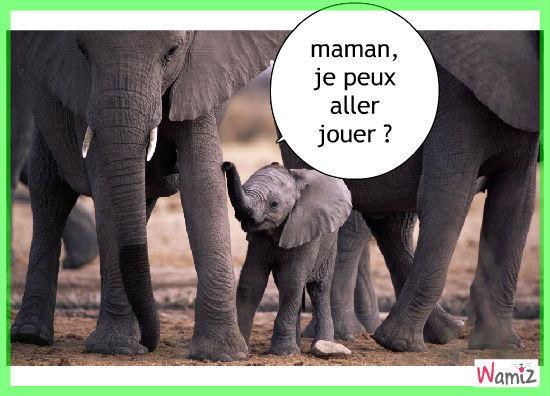 éléphant, lolcats réalisé sur Wamiz