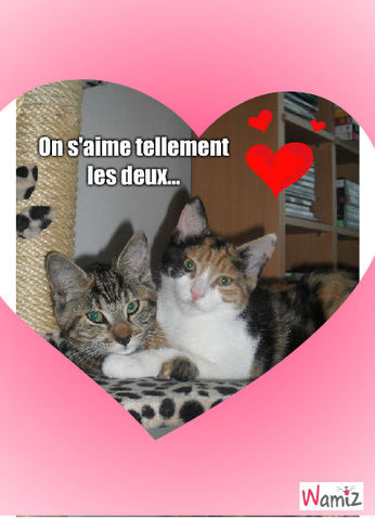 deux amour)Nala et Marley, lolcats réalisé sur Wamiz