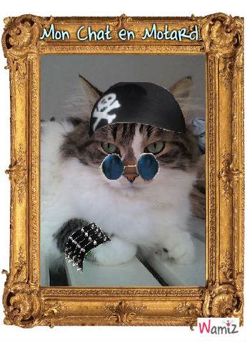 Mon chat en Motard :, lolcats réalisé sur Wamiz