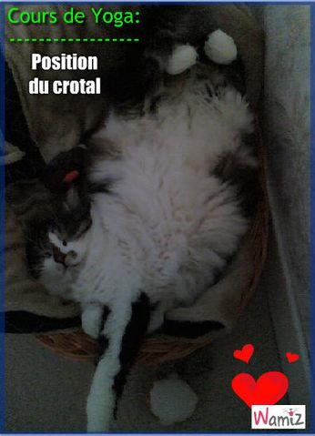 Mon chat fait du yoga, lolcats réalisé sur Wamiz