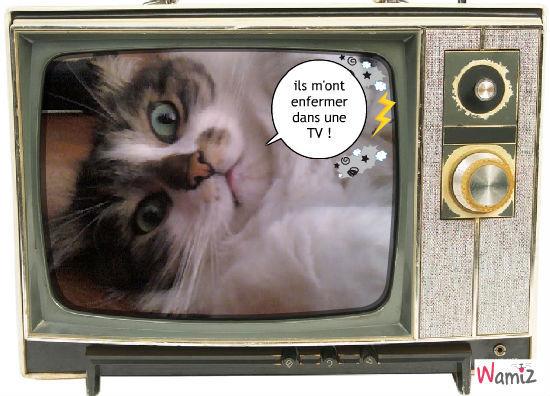 Chat dans la TV, lolcats réalisé sur Wamiz
