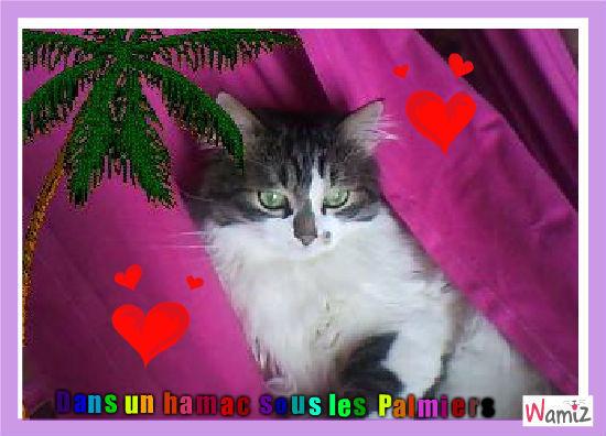 chat dans hamacs avec palmiers, lolcats réalisé sur Wamiz