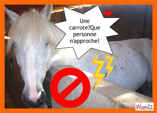 la carrote interdite, lolcats réalisé sur Wamiz