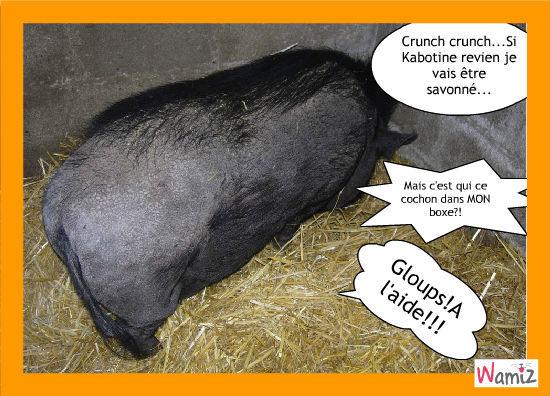 Marmotte le cochon, lolcats réalisé sur Wamiz