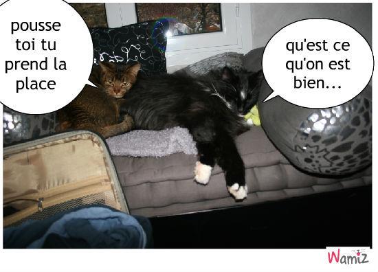 mes chatons, lolcats réalisé sur Wamiz