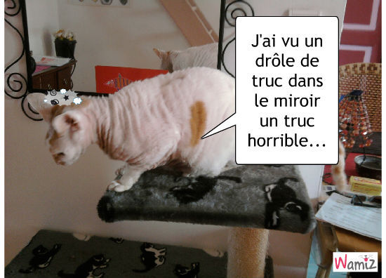 Fifi qui c'est vu dans le miroir , lolcats réalisé sur Wamiz