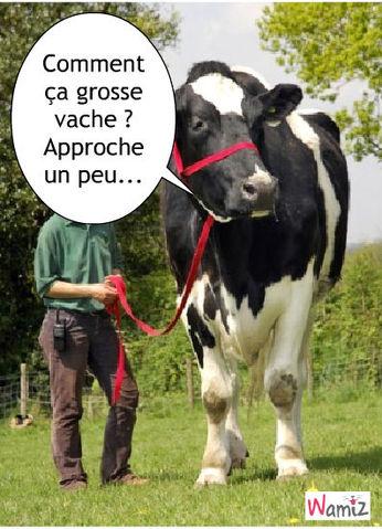Vache , lolcats réalisé sur Wamiz