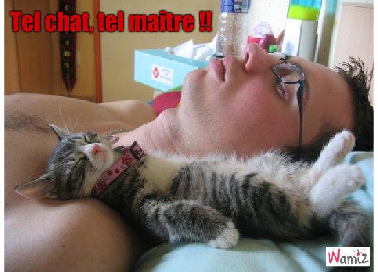 tel chat, tel maitre, lolcats réalisé sur Wamiz