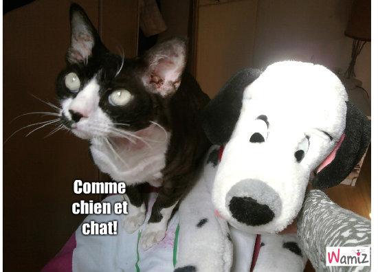 Comme chien et chat!, lolcats réalisé sur Wamiz