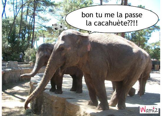 l'éléphant, lolcats réalisé sur Wamiz