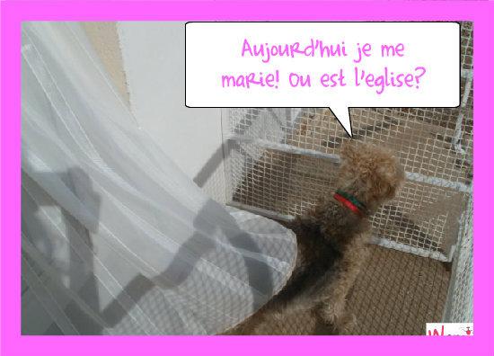 Manon se marie!, lolcats réalisé sur Wamiz