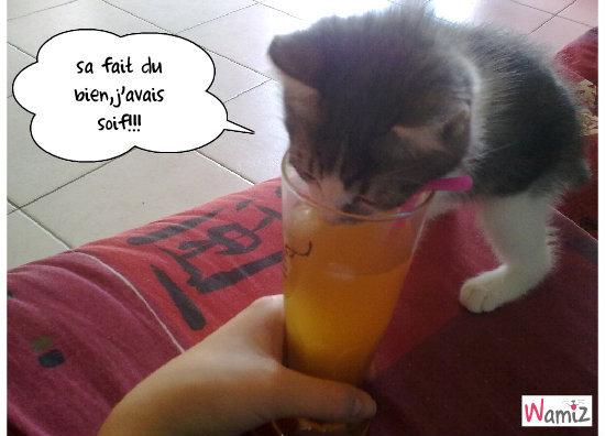 a boire svp!!!, lolcats réalisé sur Wamiz