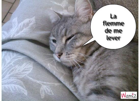 Ma chat fénient, lolcats réalisé sur Wamiz