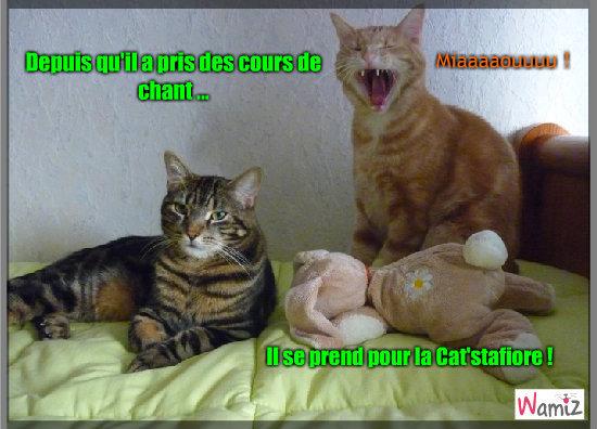 Cat'stafiore, lolcats réalisé sur Wamiz