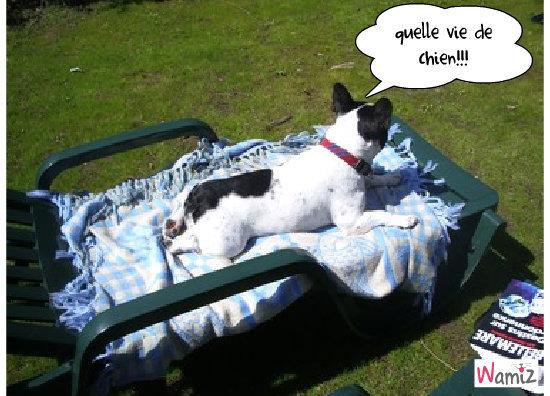 quelle vie de chien, lolcats réalisé sur Wamiz