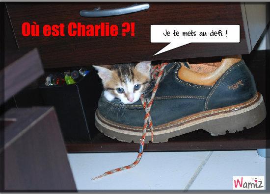 Où est Charlie ?!, lolcats réalisé sur Wamiz