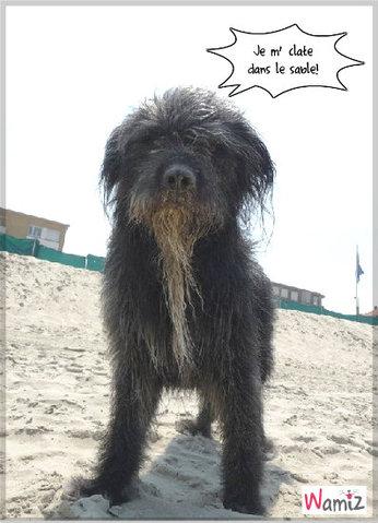 Hagrid à la plage, lolcats réalisé sur Wamiz