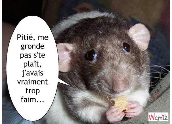 Après le chat potté, le rat potté, lolcats réalisé sur Wamiz