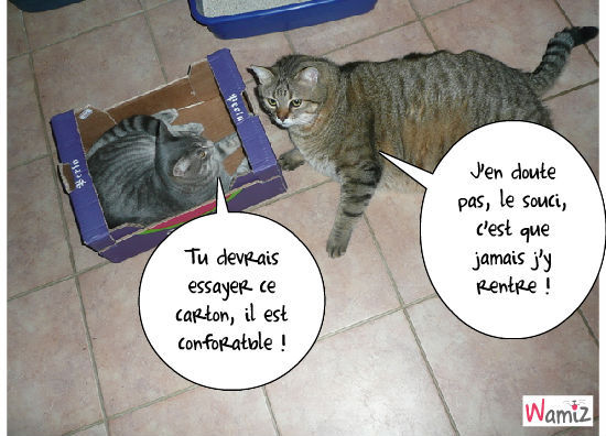 Discussion de chats, lolcats réalisé sur Wamiz