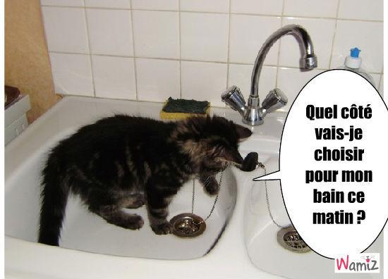 chat qui veut se laver, lolcats réalisé sur Wamiz