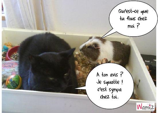 chat squatteur, lolcats réalisé sur Wamiz