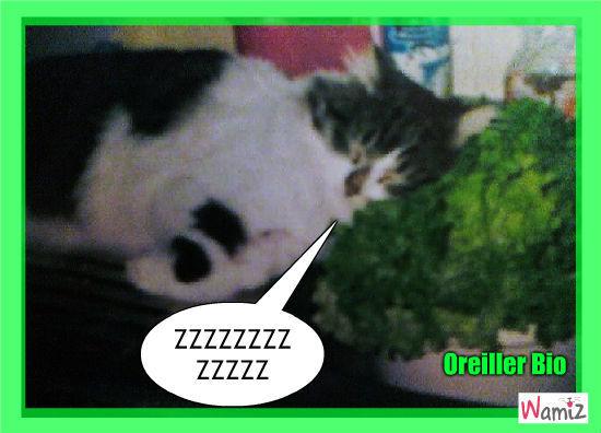 Chat sur une salade, lolcats réalisé sur Wamiz