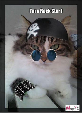 chat rock star, lolcats réalisé sur Wamiz