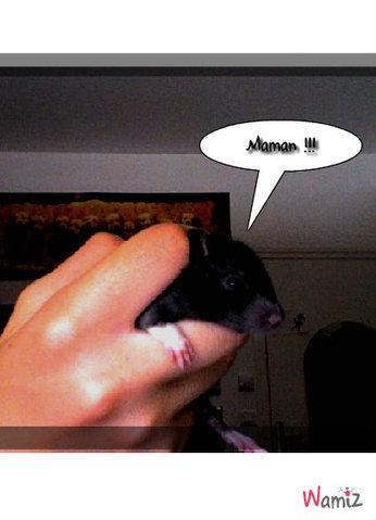 bébé titi à é semaines (Rat), lolcats réalisé sur Wamiz