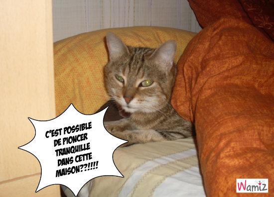 Cleo voudrait dormir!!!!!, lolcats réalisé sur Wamiz