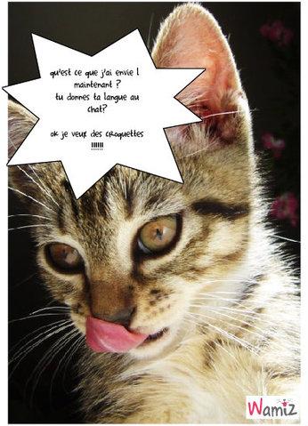 tu donnes ta langue au chat?, lolcats réalisé sur Wamiz