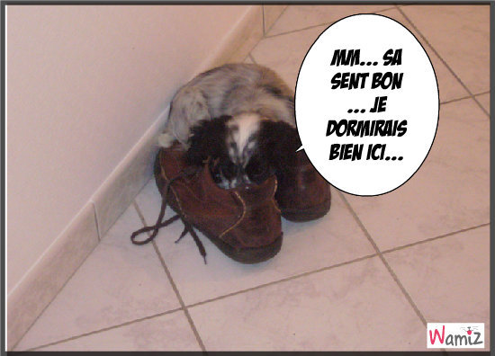 dolly dans les chaussures a mon papa, lolcats réalisé sur Wamiz