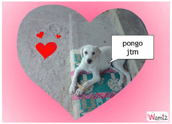 mon chien pongo, lolcats réalisé sur Wamiz