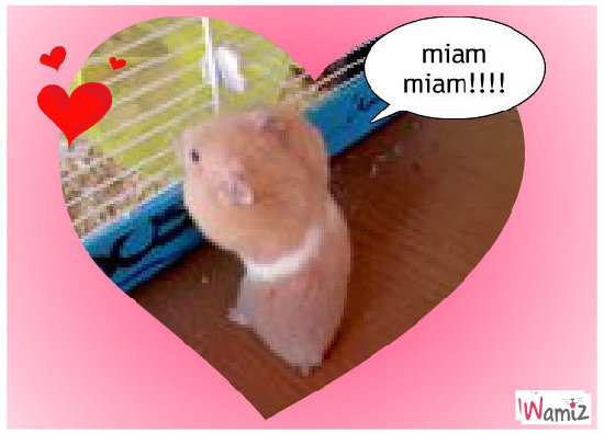 HAMTARO miam miam !!!, lolcats réalisé sur Wamiz