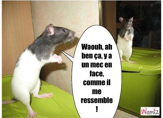 rat devant un miroir, lolcats réalisé sur Wamiz